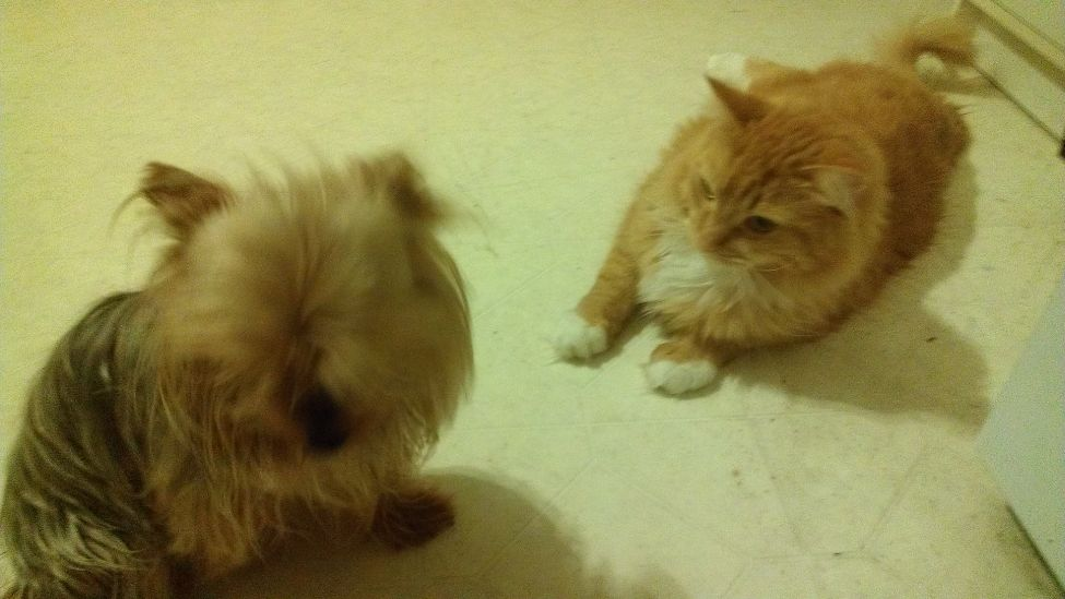 The closest Steve will get to tolerating Peanut