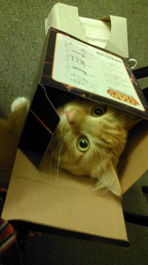 head in a box